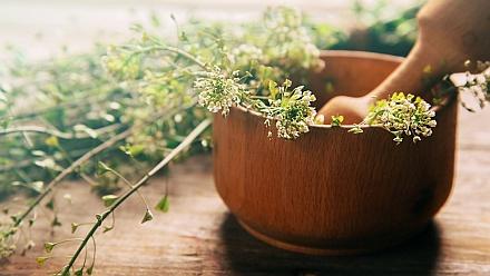 Pflanzenheilkunde (Phytotherapie) – Schilddrüsenüberfunktion, Schilddrüsenunterfunktion, Hashimoto Thyreoiditis